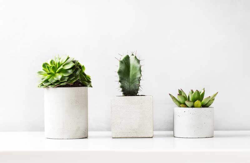 How to care for cactus & succulents